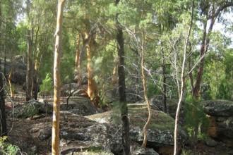 Koorilgur Nature Reserve